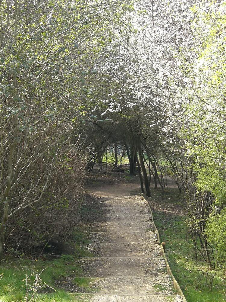 Wooded Path by Danielle Murdoch