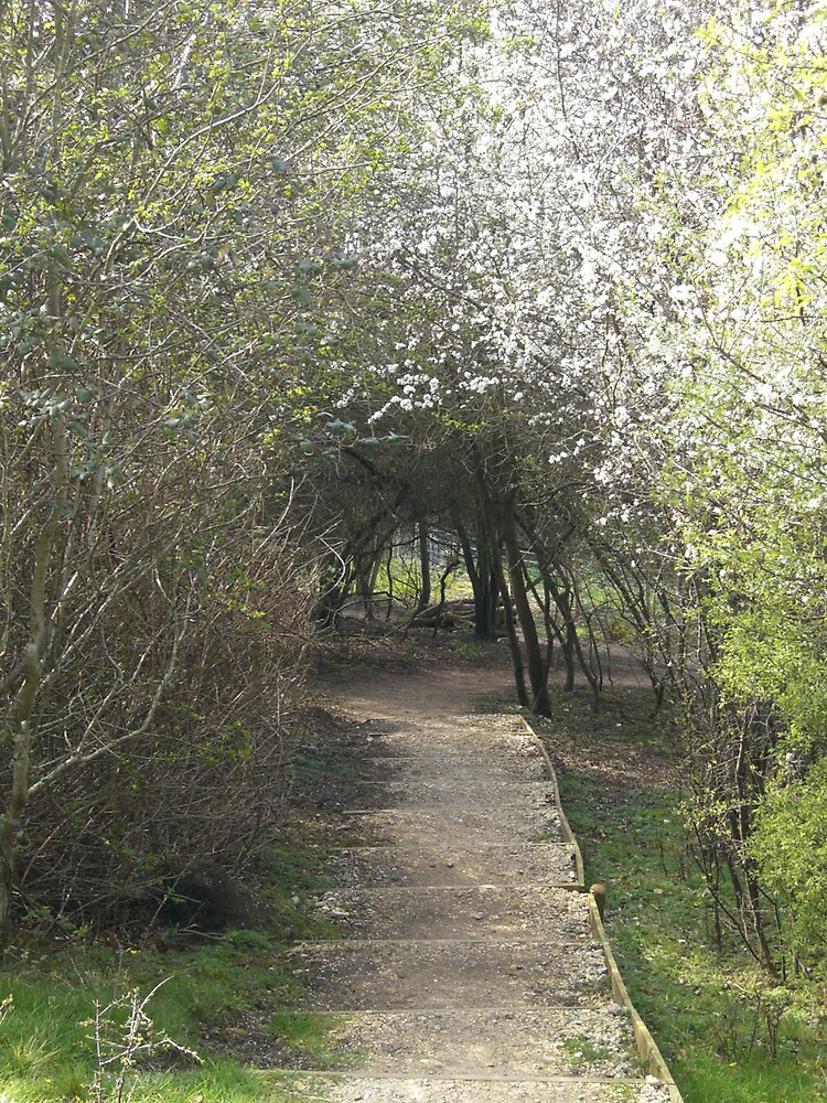 Wooded Path by Deeful