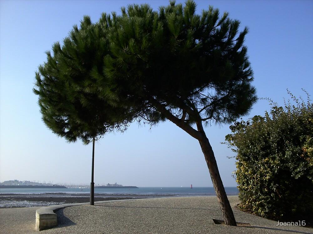 Tree by Joanna Jeffrees