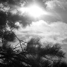 Into the Heavens by Brett Yoncak