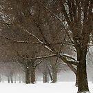 It's Snowing by Debra Fedchin