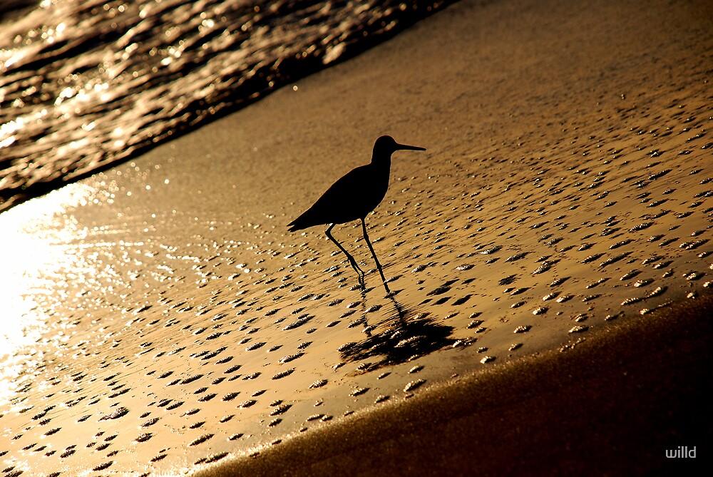 Bird Beach Bath by willd