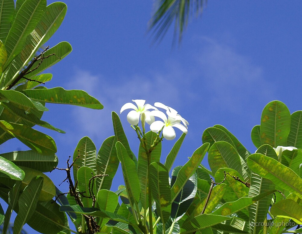 Scent of Hawaii by mcrowleyphoto