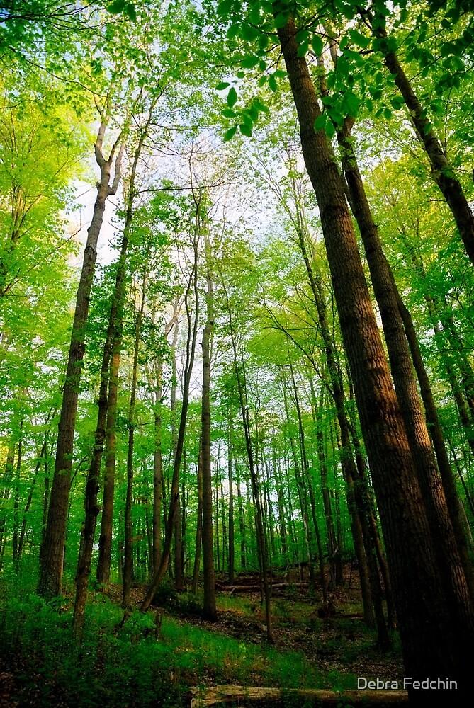 Towering Trees by Debra Fedchin