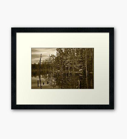 Pond Reflections Framed Print