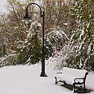 Snow covered Bench & Lamppost by Debra Fedchin