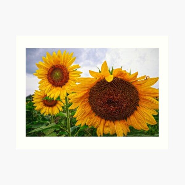 Sunflower Mama & her Daughters Art Print