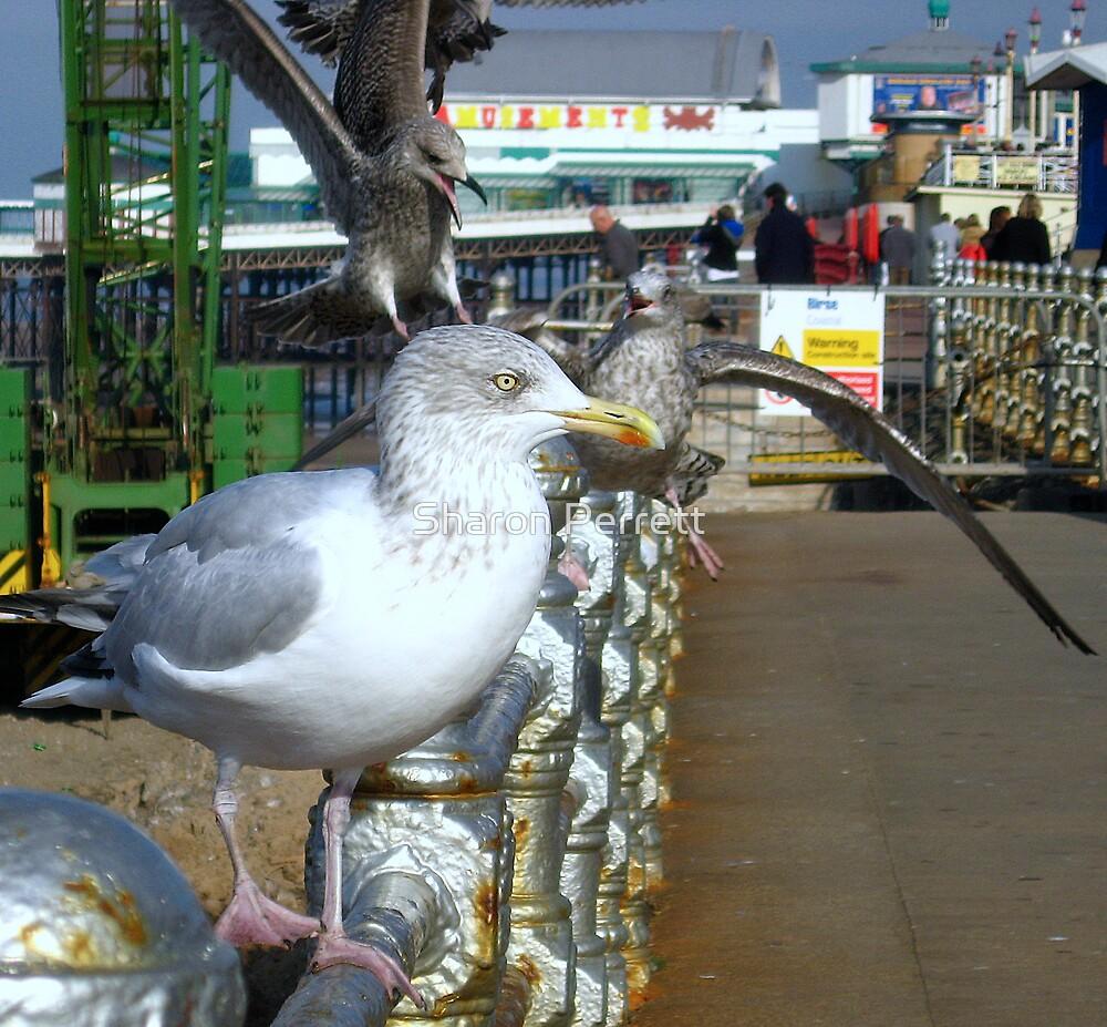 The Gull Queue by Sharon Perrett