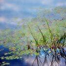 The Pond by Debra Fedchin