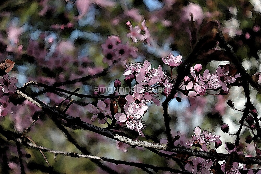 Spring Plum Blossoms by amgunnphotoart