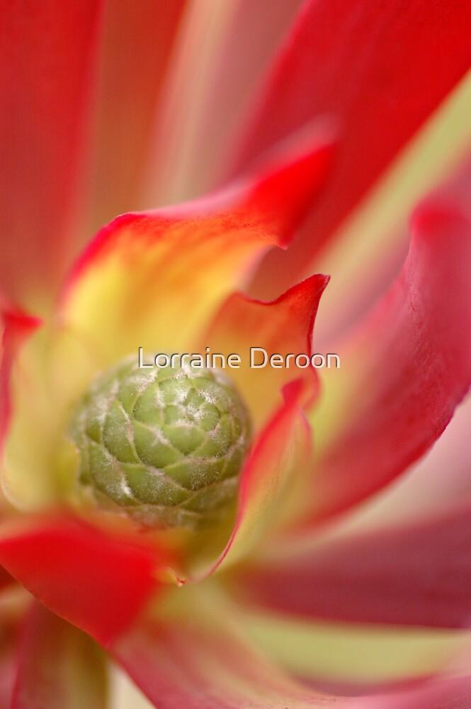 Blush by Lorraine Deroon