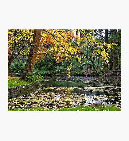 Autumn #2, Alfred Nicholas Memorial Gardens, Victoria, Australia Photographic Print
