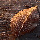Gold leaf by Gisele Bedard