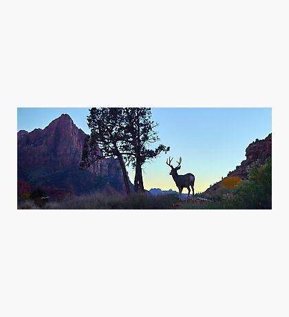 Enjoying a Zion Sunset Photographic Print