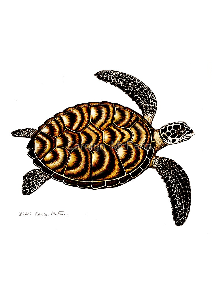 Hawksbill Sea Turtle by twopurringcats