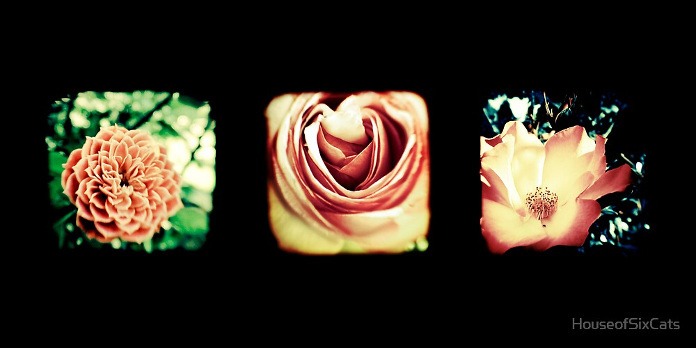 Flashback Rose Triptych by HouseofSixCats