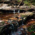 Along the Falls Trail by Debra Fedchin