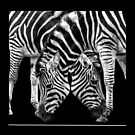 Zebra Crossing by carol brandt