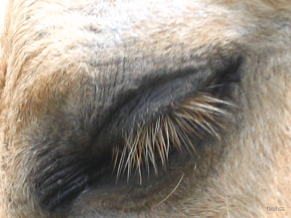 A Horses Eye  by teahss