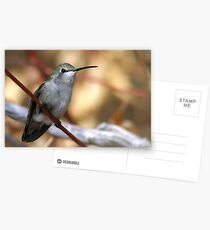 Hummer In Fall Postcards
