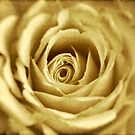 Yellow Rose by Debra Fedchin