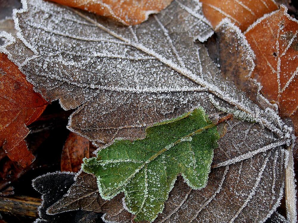 Frosty by David James