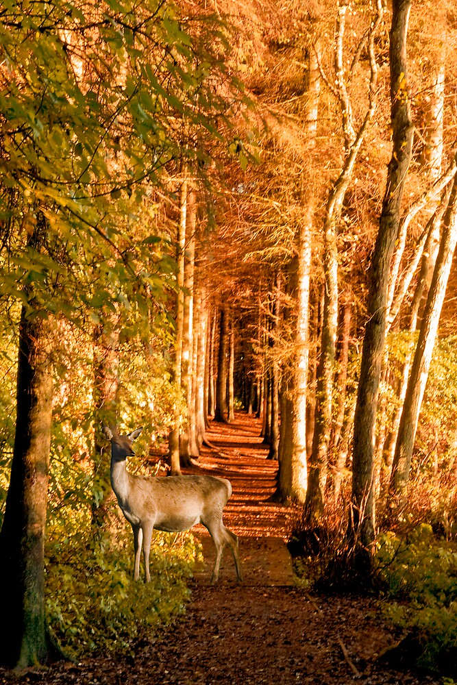 Autumn Woodland by Chris Clark