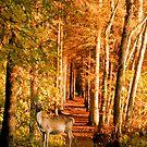 Autumn Woodland by Chris Clark