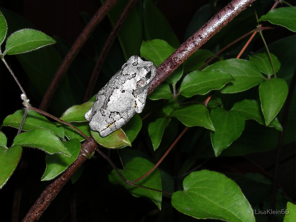 Tree Frog 1 by LisaKlein66