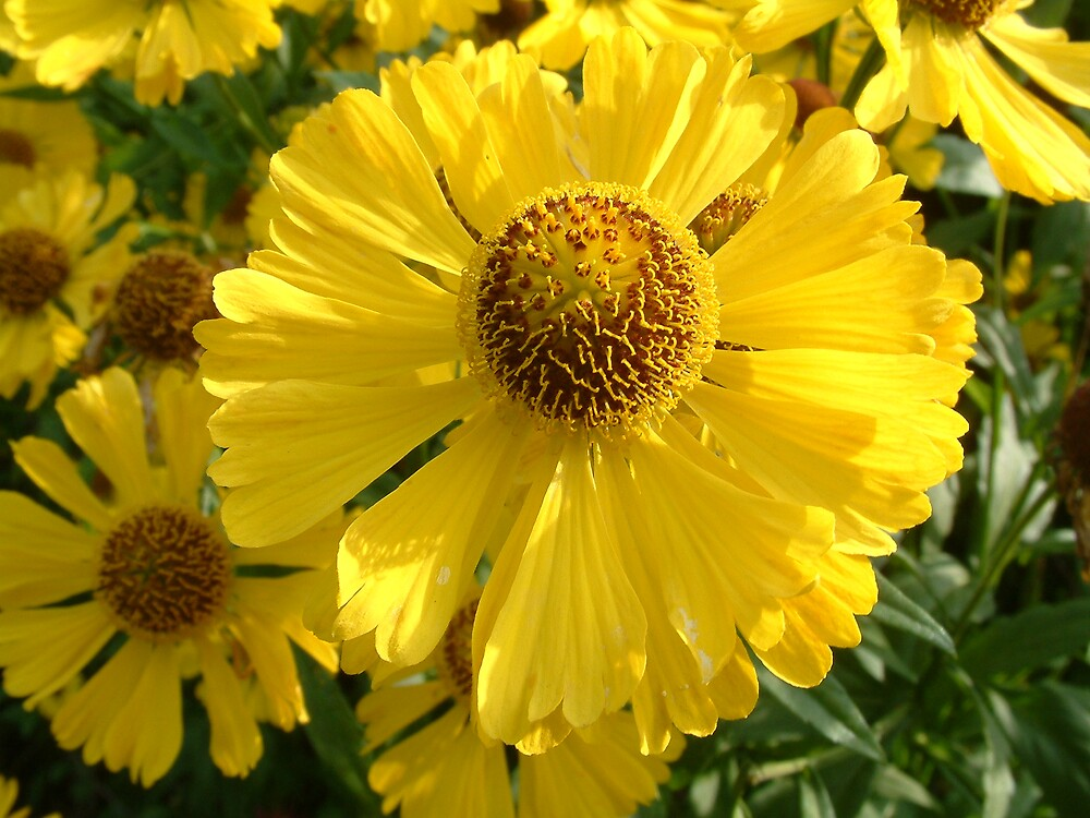 Yellow Head by Linda Bretherton