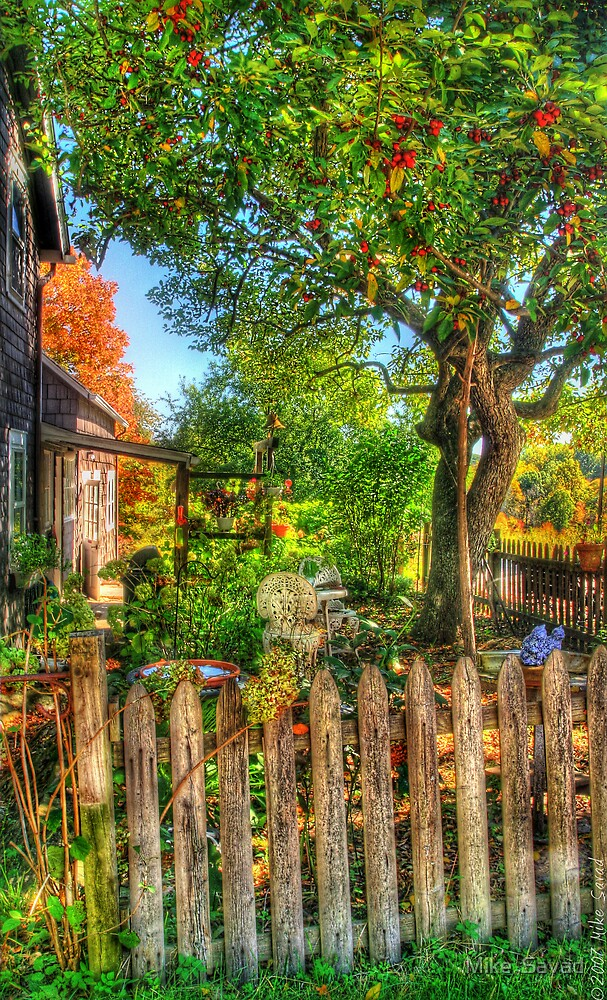 The Apple Tree by Mike  Savad