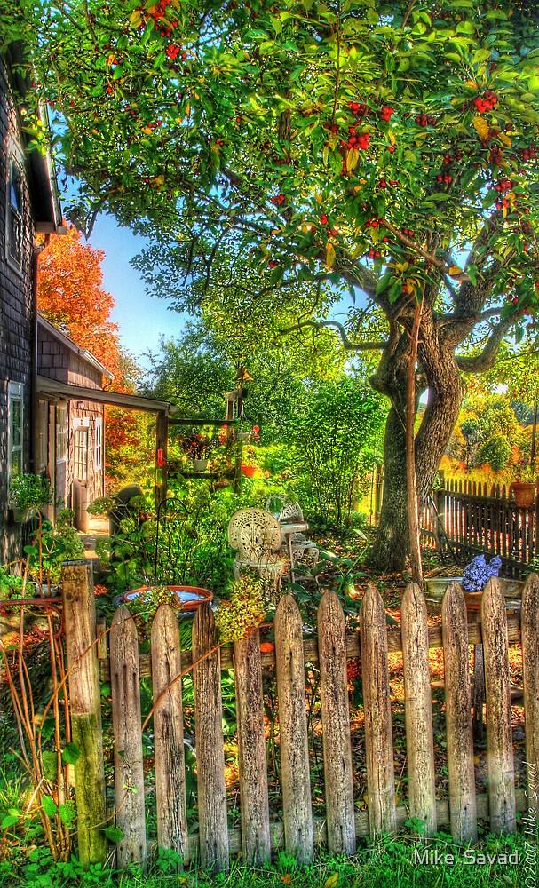 The Apple Tree by Michael Savad
