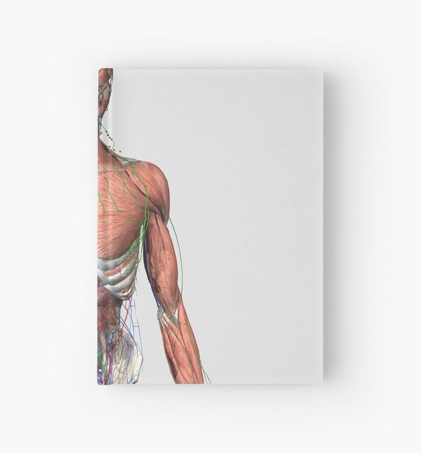 Cuadernos de tapa dura «Ilustración del torso humano superior con ...