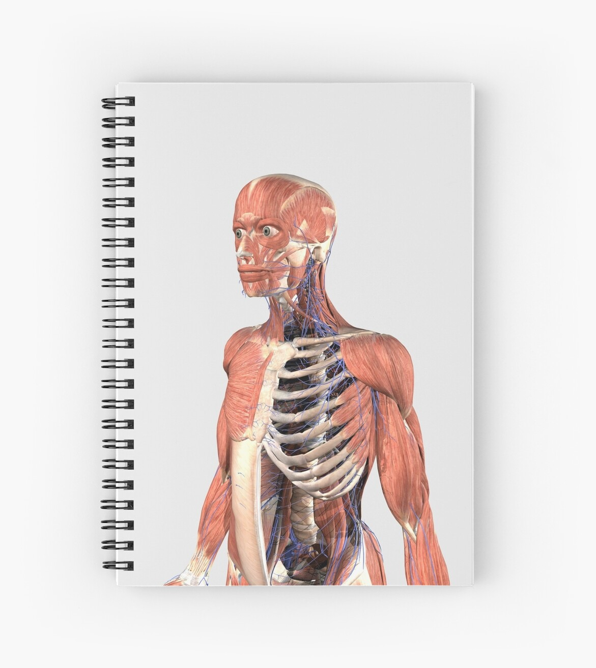 Human Upper Body Showing Muscle Parts Axial Skeleton And Veins