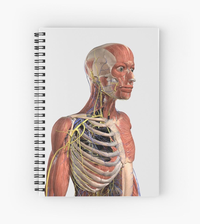 Cuadernos de espiral «Parte superior del cuerpo humano que muestra ...