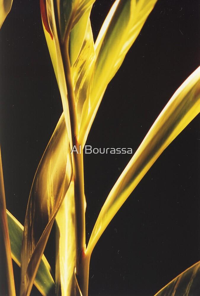 Firey Beauties by Al Bourassa