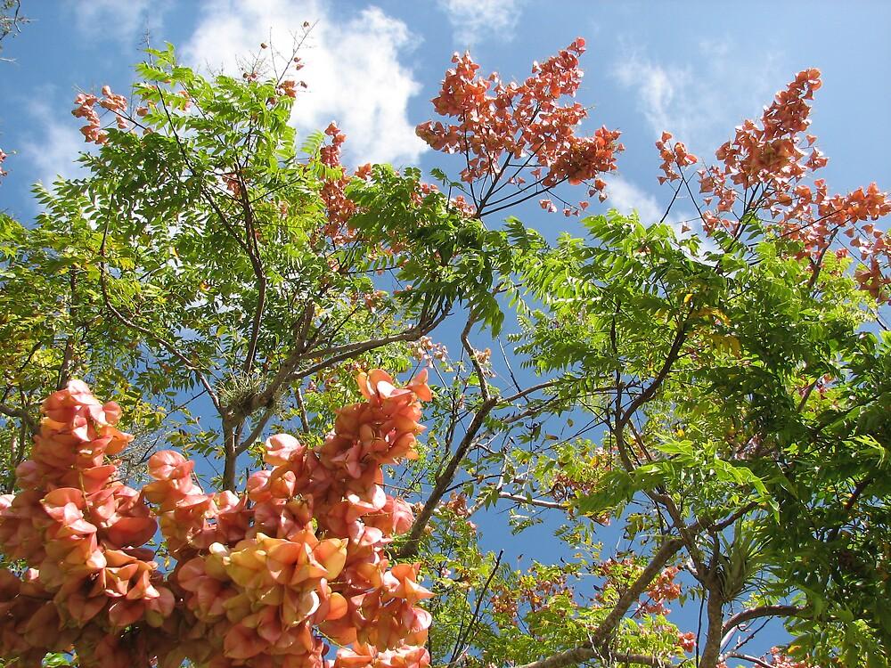 Flowered Tree by Jared Thomas