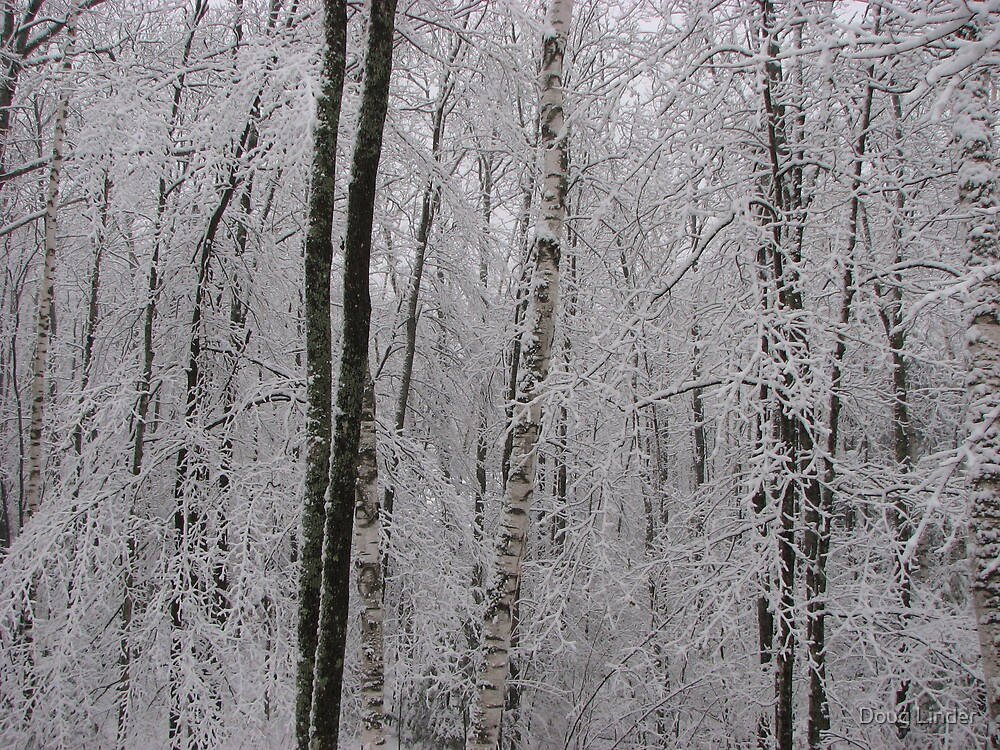 Snow on Birch by Doug Linder
