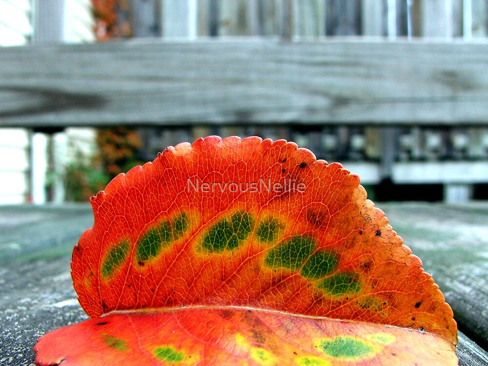 Leaf by NervousNellie