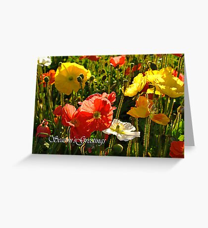 Iceland Poppy Greeting Card