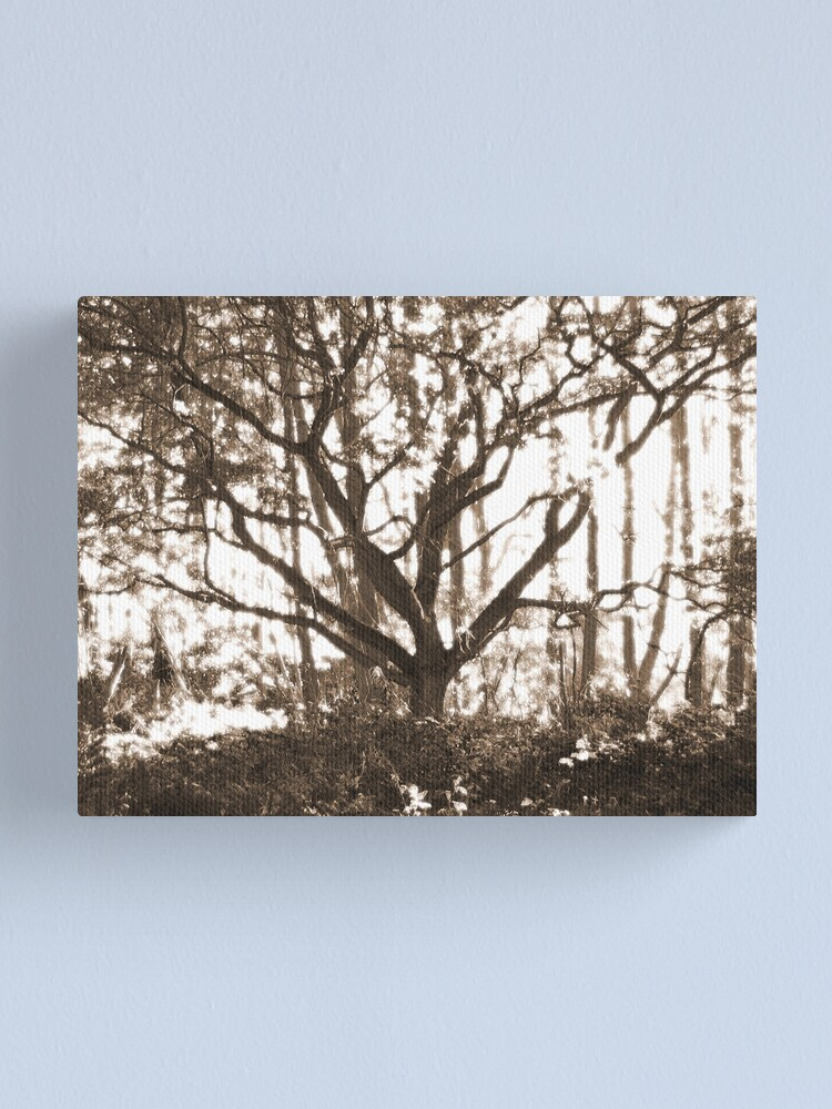 Alternate view of Ghost Tree Canvas Print