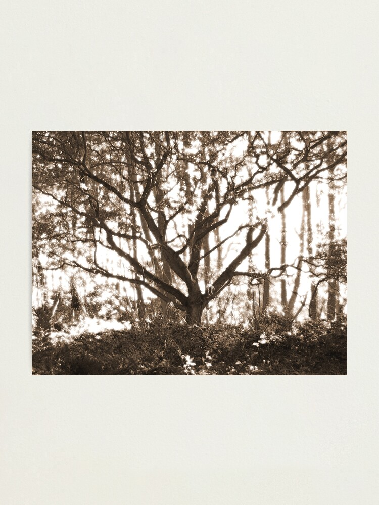 Alternate view of Ghost Tree Photographic Print