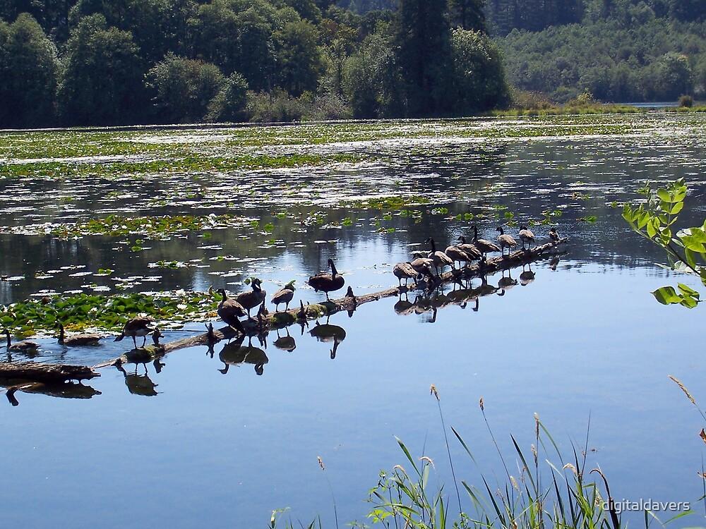 All my ducks in a row by digitaldavers