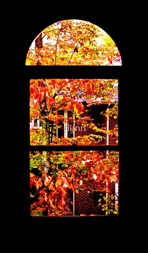 Window by jlynn