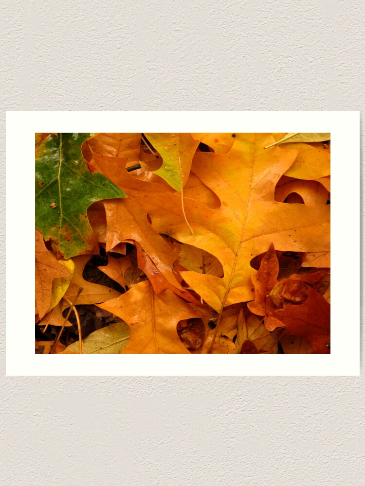 Alternate view of Autumn Leaves Art Print