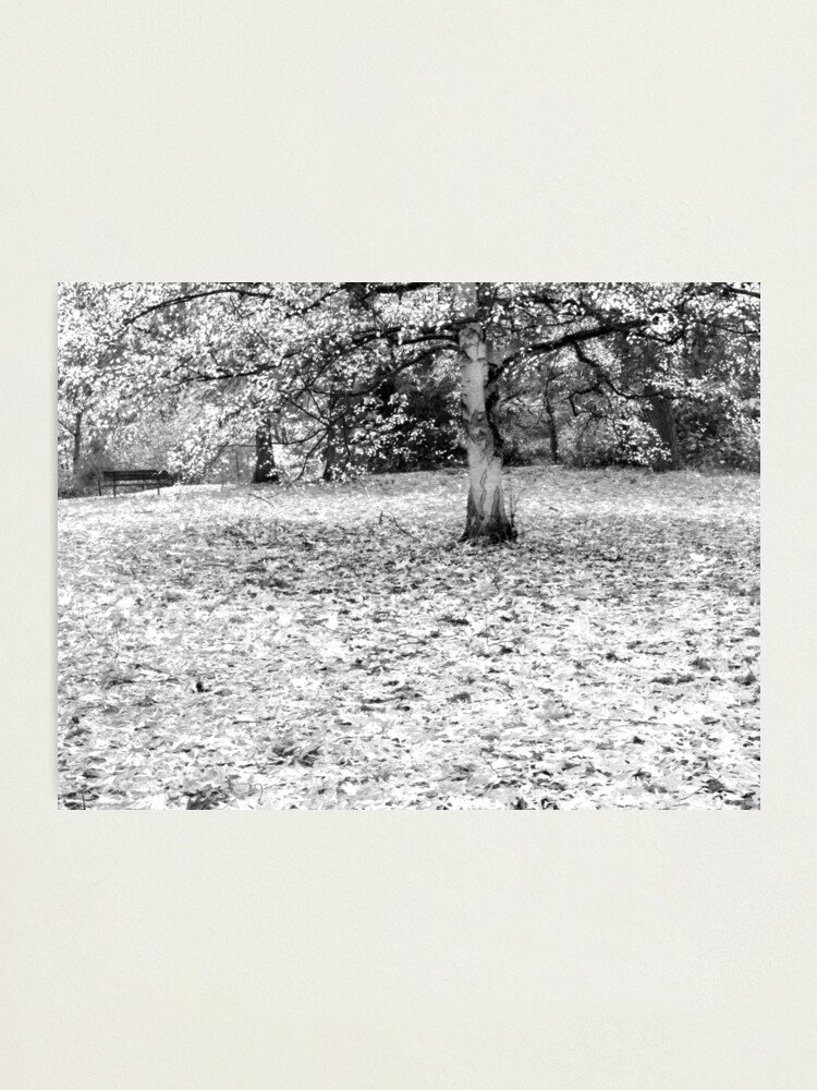 Alternate view of The Fallen Photographic Print