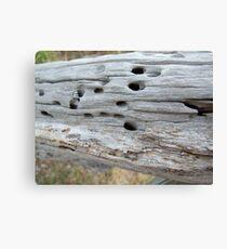 Termite Castle Canvas Print