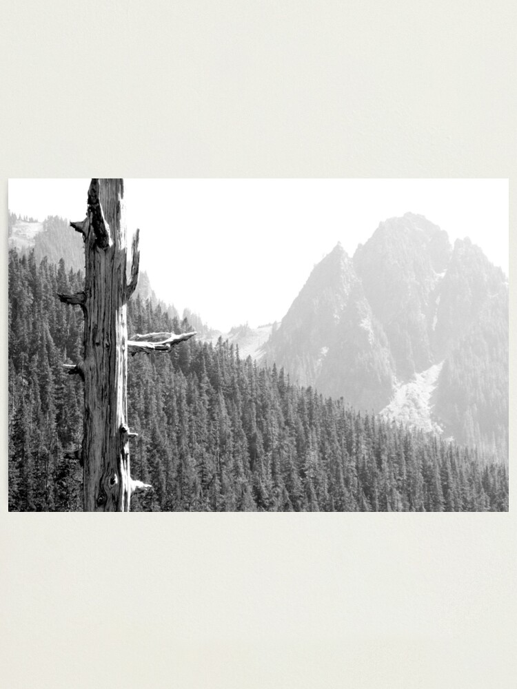 Alternate view of Lonesome Pine Photographic Print