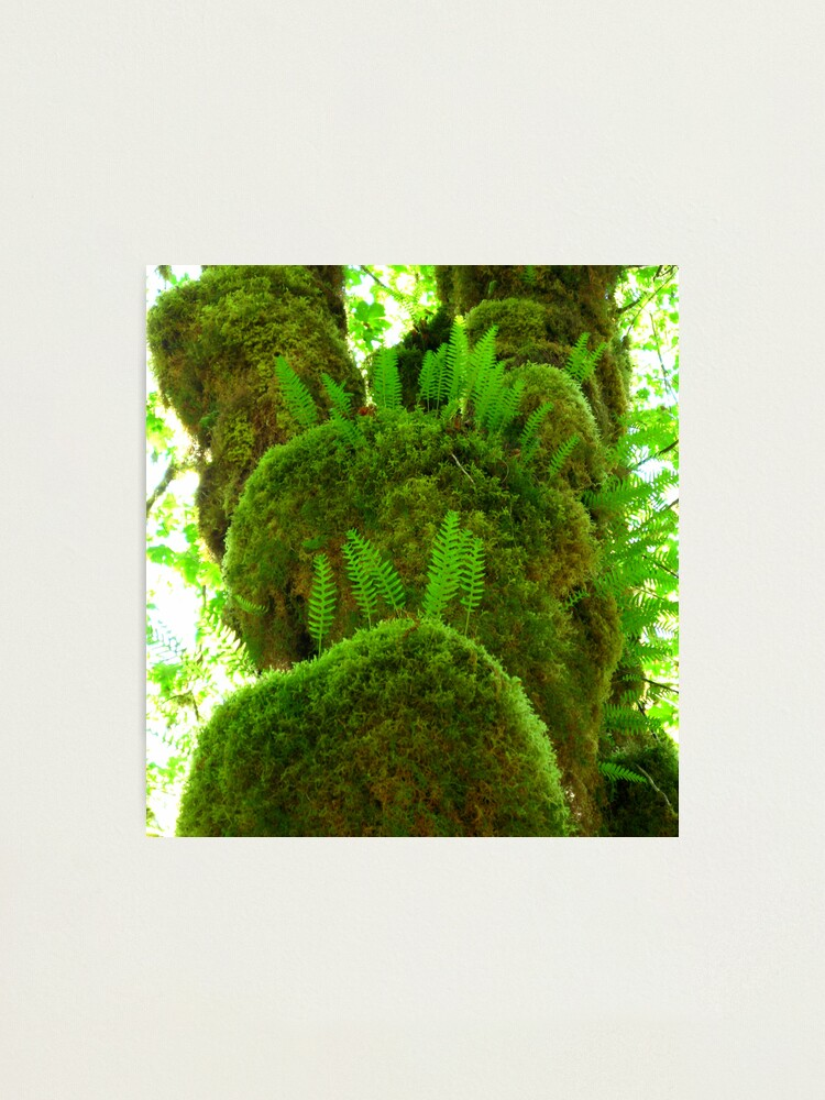Alternate view of Fuzzy Ferns Photographic Print