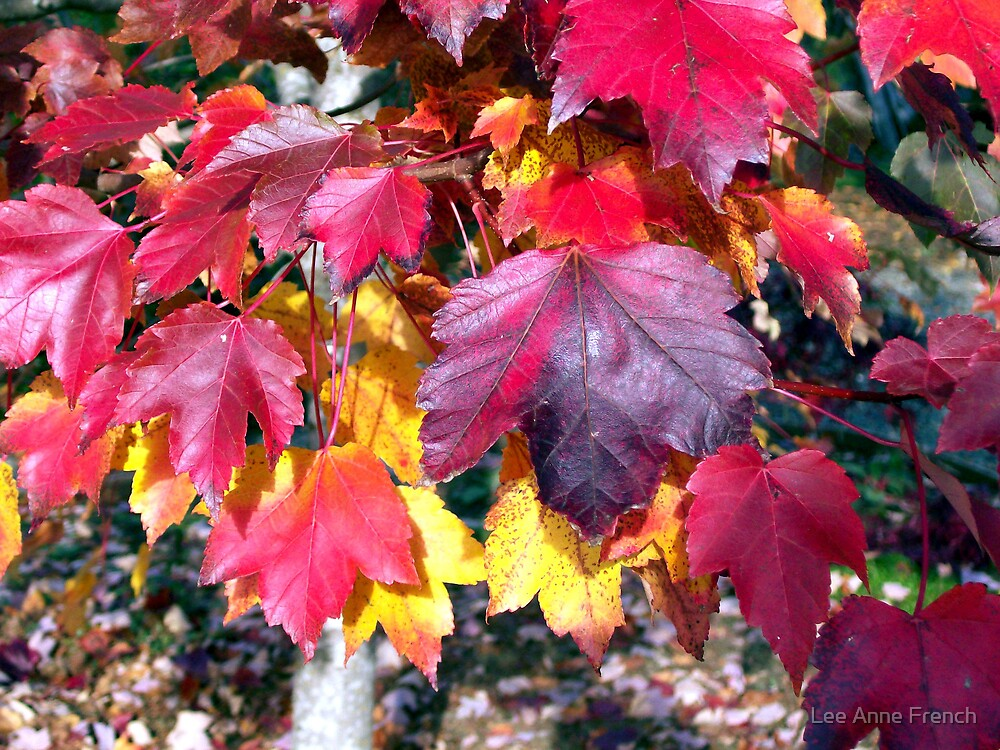 October Glory's Last Hurrah by Lee Anne French